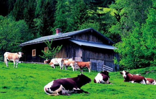 努力使良好生态环境成为乡村振兴的重要支撑