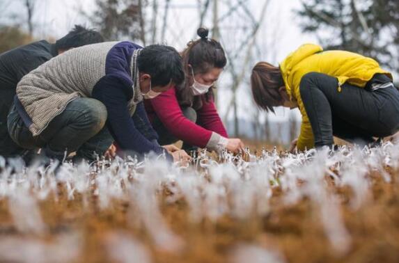 农业成为疫情下受影响最小的产业