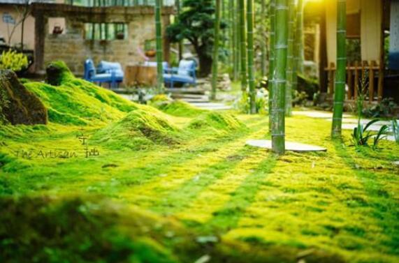 打造精品民宿提升乡村旅游品质