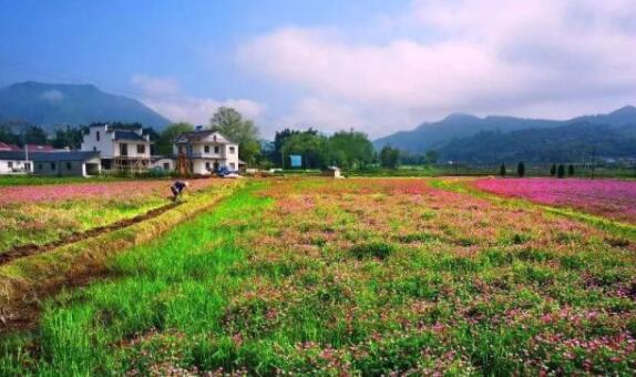乡村旅游的六种发展类型合理挖掘乡村特色资源