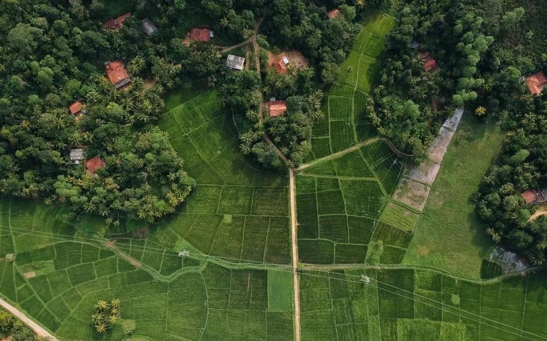 实施乡村振兴战略要走乡村绿色发展之路