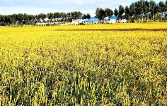"""内蒙古""""金稻之乡""""聚力打造绿色发展引领区和乡村振兴样板区"""