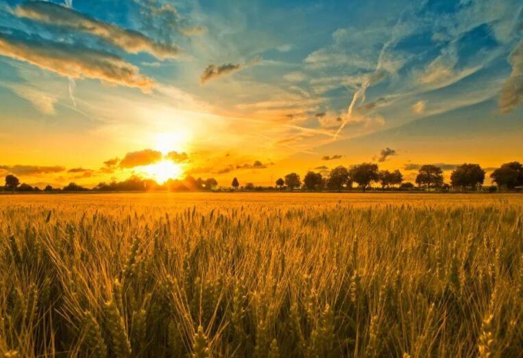 把脉粮食安全多措并举稳住农业基本盘